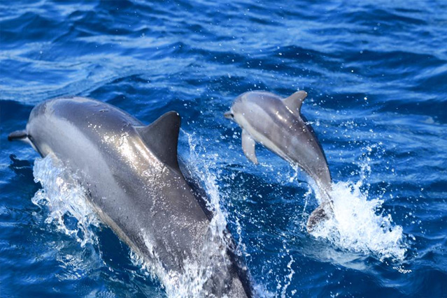 Frequent Sightings of Turtles & Dolphins
