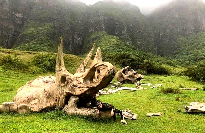 Jurassic film and other movie props